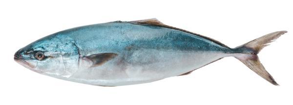 Alimentos prohibidos en el embarazo y el por qué - Pescados azules grandes