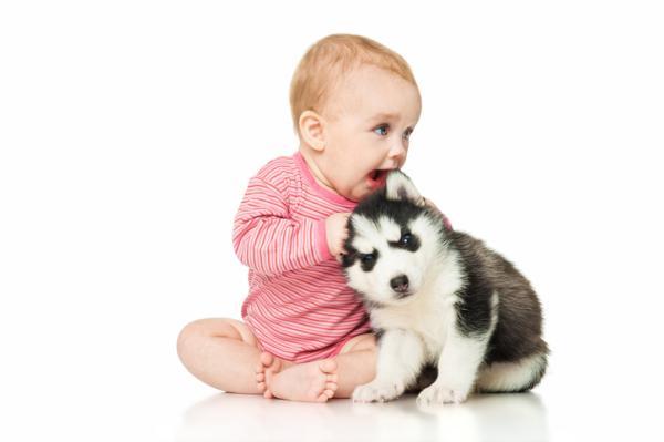 ¿Un bebé recién nacido puede estar cerca de un perro?