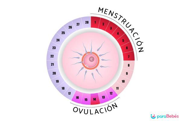 ¿Puedo quedar embarazada días antes de mi periodo? - ¿Cuándo puedo quedar embarazada?
