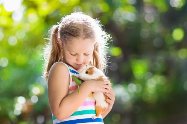 Las mejores mascotas para niños - Roedores